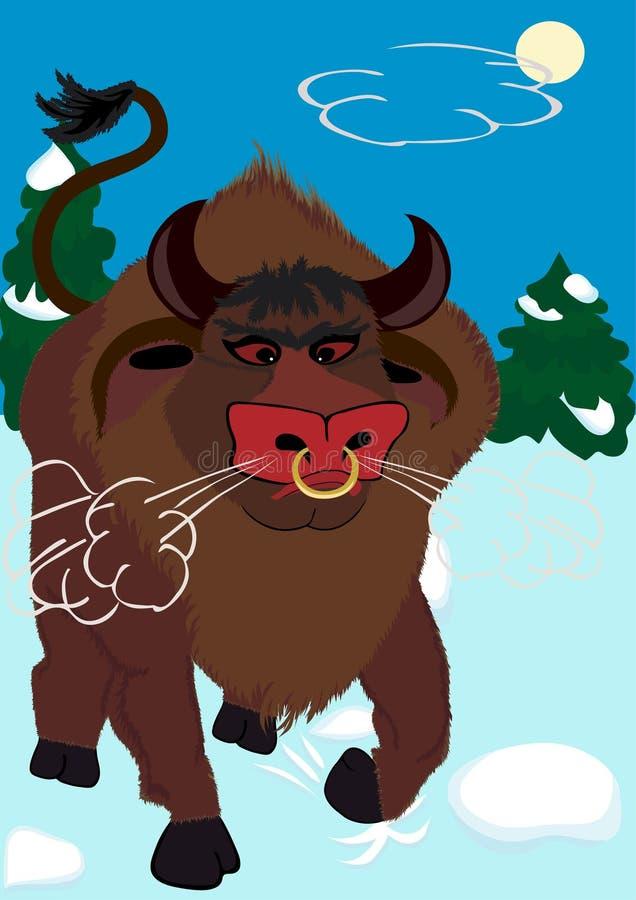 The furious bull on a snow