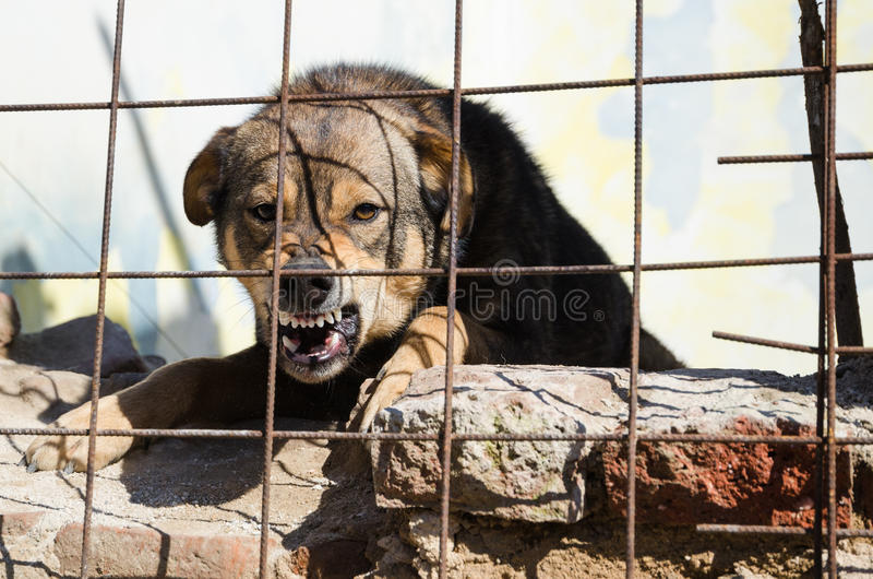 Furious dog. Furious lonely dog in fence stock photography
