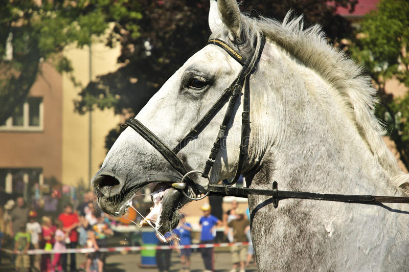 Furious horse. Furious white horse in police action royalty free stock photos