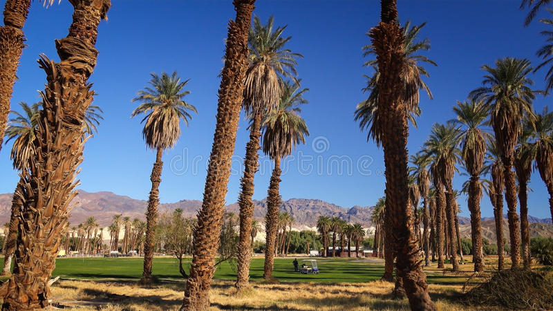 Furnace Creek Golf Course in Death Valley. Palm trees and Furnace Creek Golf Course in Death Valley National Park royalty free stock photography
