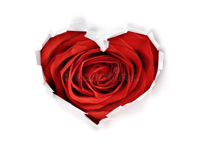 Furo da forma do coração com a rosa do vermelho do dia de Valentim através do papel fotografia de stock