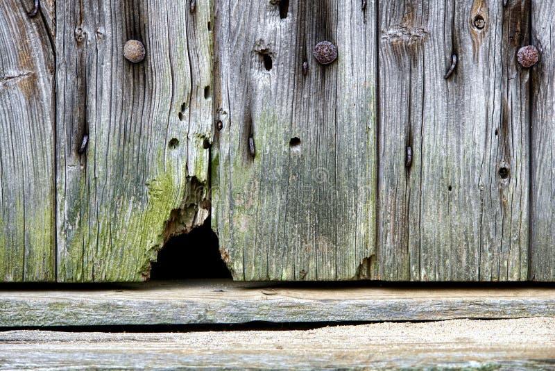 Furo do rato em uma porta de celeiro velha imagem de stock royalty free