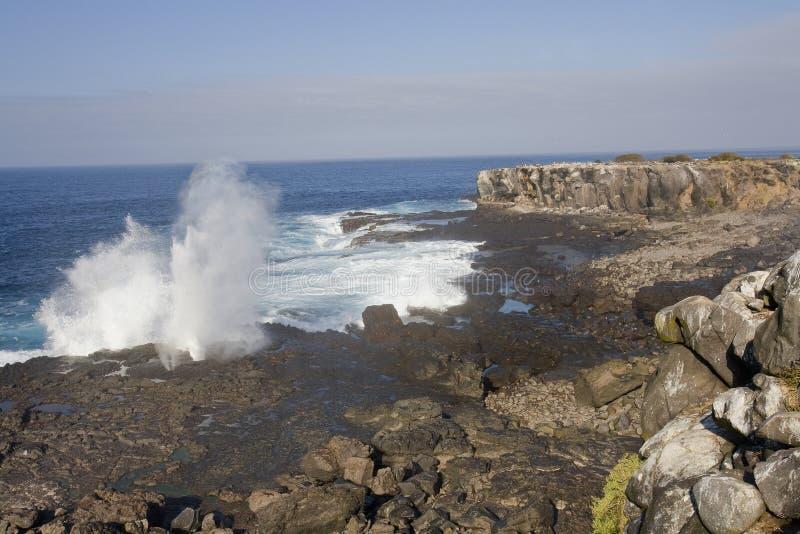 Download Furo Galápagos do sopro imagem de stock. Imagem de curso - 12810829