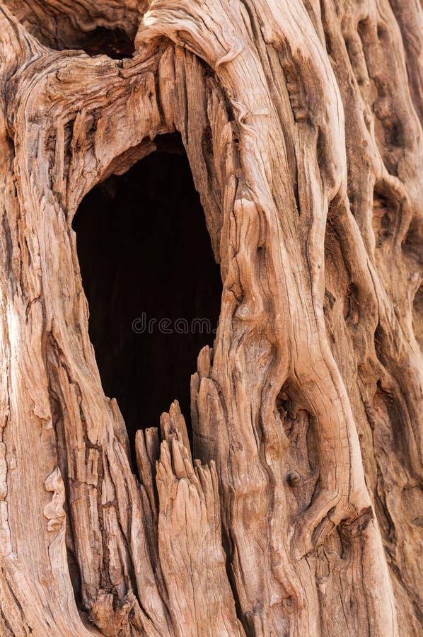 Furo na árvore foto de stock