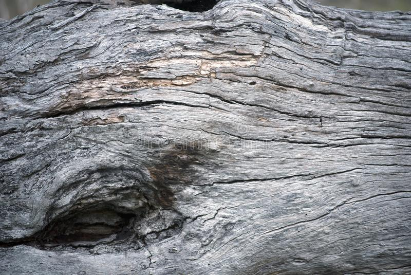 Furo na superfície do tronco de árvore imagens de stock royalty free