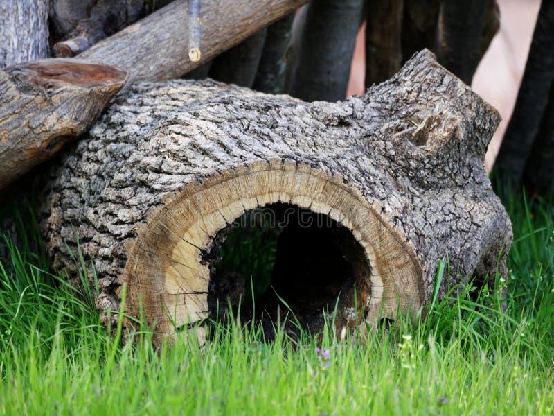 Furo no tronco de árvore foto de stock royalty free