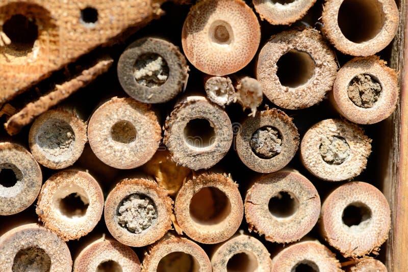 Furos fechados do ninho do abrigo do inseto de abelhas solitários selvagens foto de stock