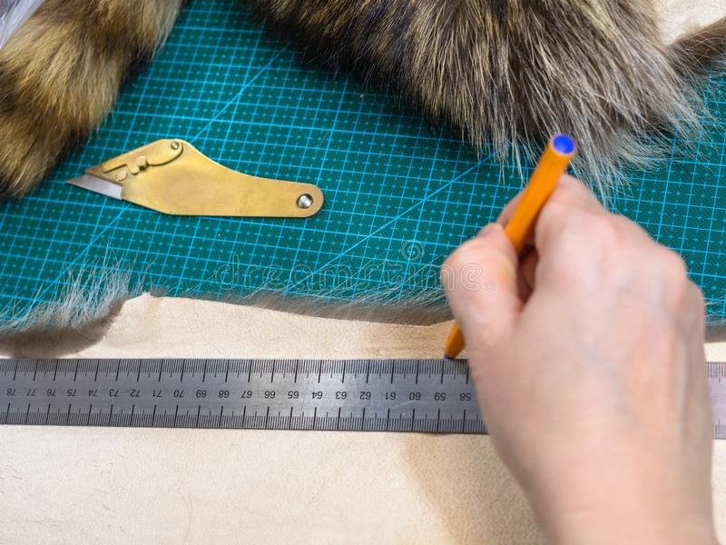 Furrier draws pattern on pelt with pen and ruler. Workshop of manufacturing of coats from raccoon fur - furrier draws a cutting pattern on a fur pelt with pen stock images