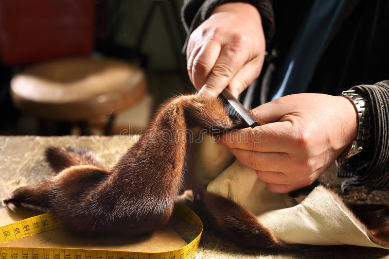 Furrier. Laboratory of fur, furrier prepares leather stock image