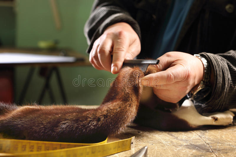 Furriers combing fur. Laboratory of fur, furrier prepares leather royalty free stock photo