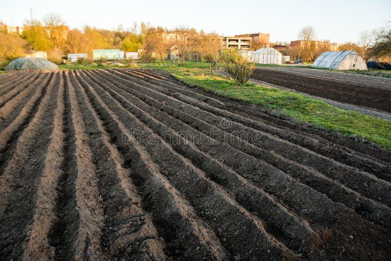 Furrow σειρές με τις πατάτες που φυτεύτηκαν ακριβώς στον οργανικό οικογενειακό κήπο στοκ εικόνες με δικαίωμα ελεύθερης χρήσης