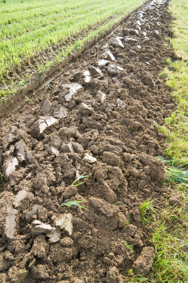 Furrow. First ploughed furrow on a field stock photo