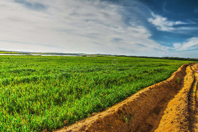 Furrow in a green field. Under a blue sky royalty free stock images