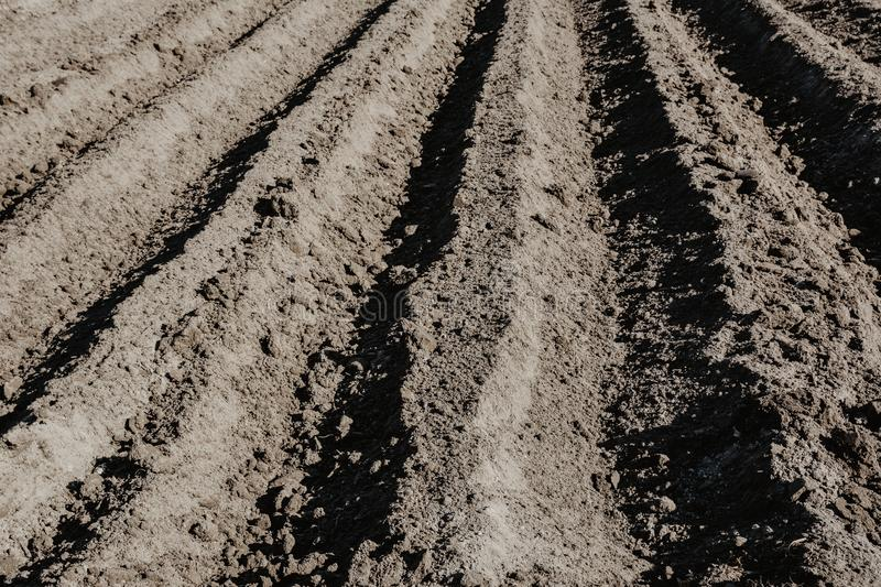 Furrow rows in organic field prepared for planting potatoes by h. And. Organic farming stock photo