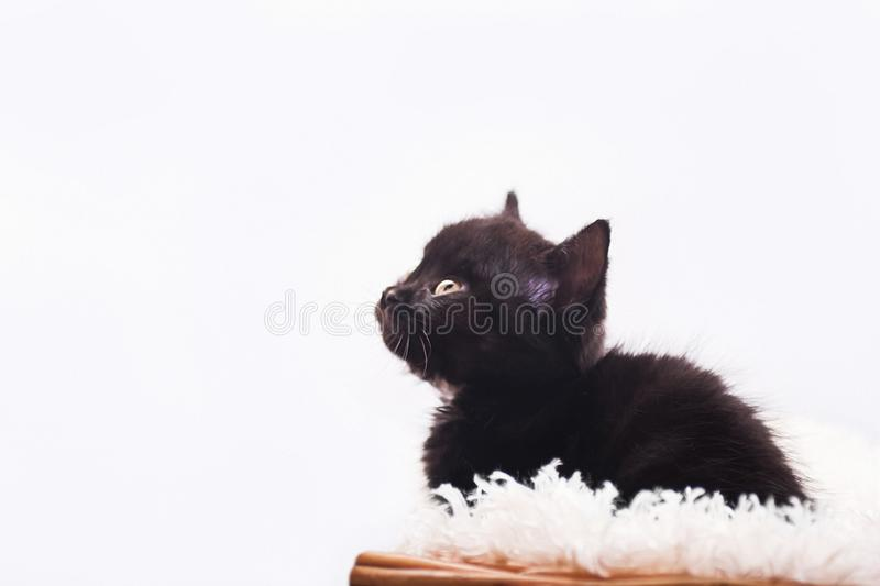 Furry black kitten in basket royalty free stock photo