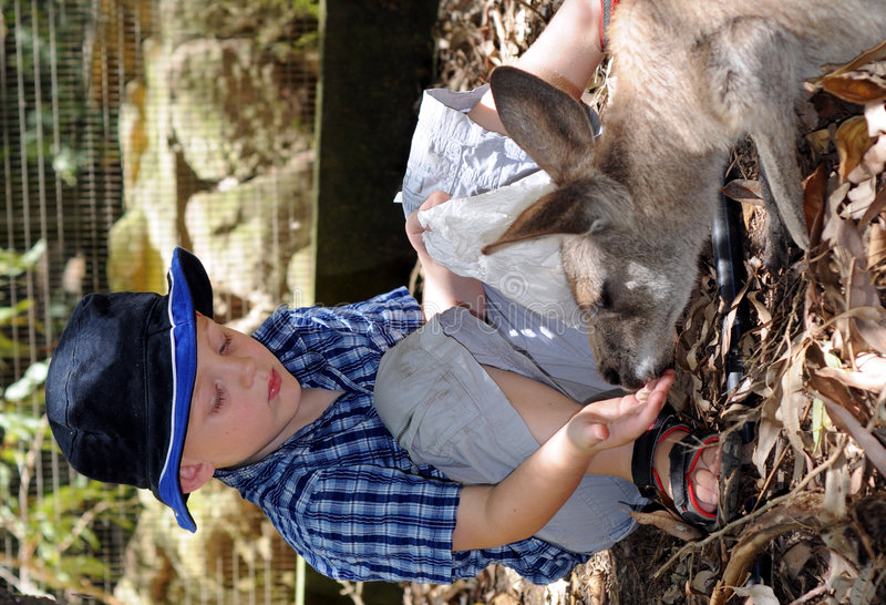Free Furry Friend Royalty Free Stock Photos - 8559138