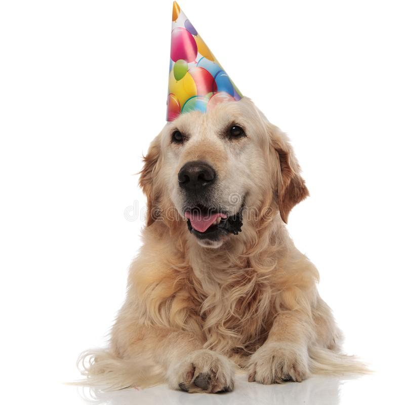 Excited Birthday Golden Retriever Looks To Side While