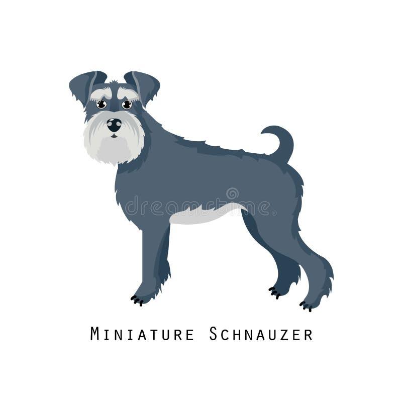 Free Furry Human Friend, Home Animal And Decorative Dog: Miniature Schnauzer. Stock Photography - 107823092