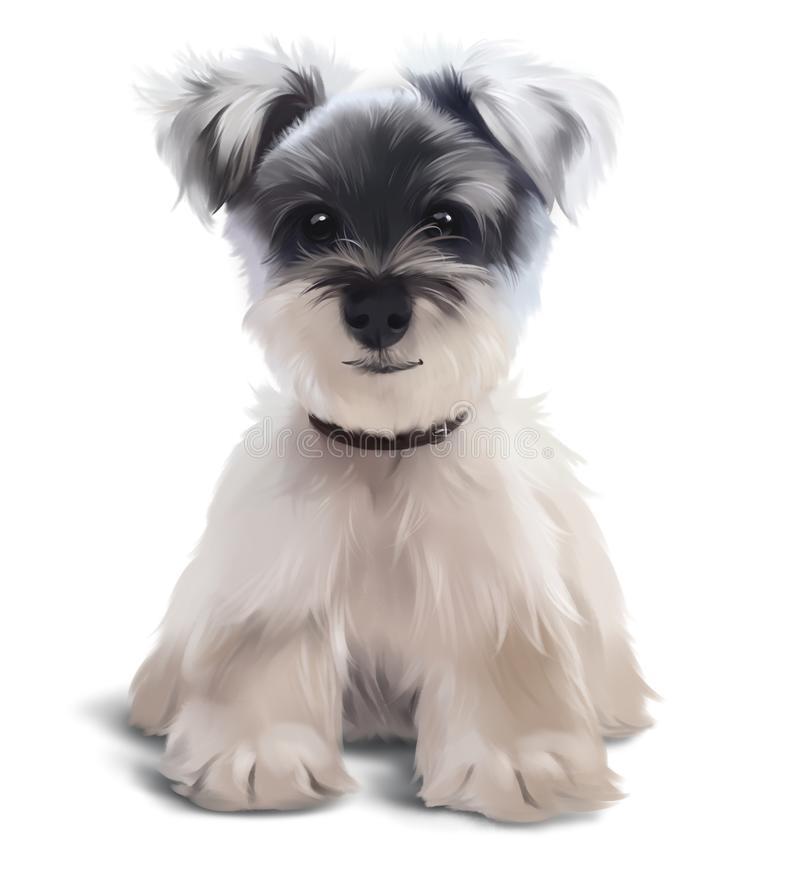 Furry Terrier sitting on the floor royalty free stock photography