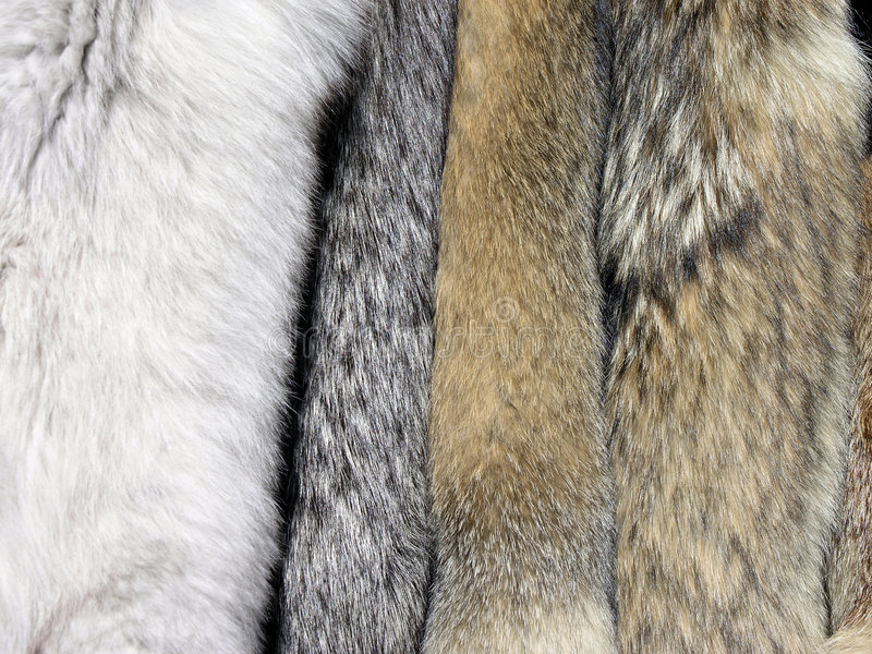 Furs stock images