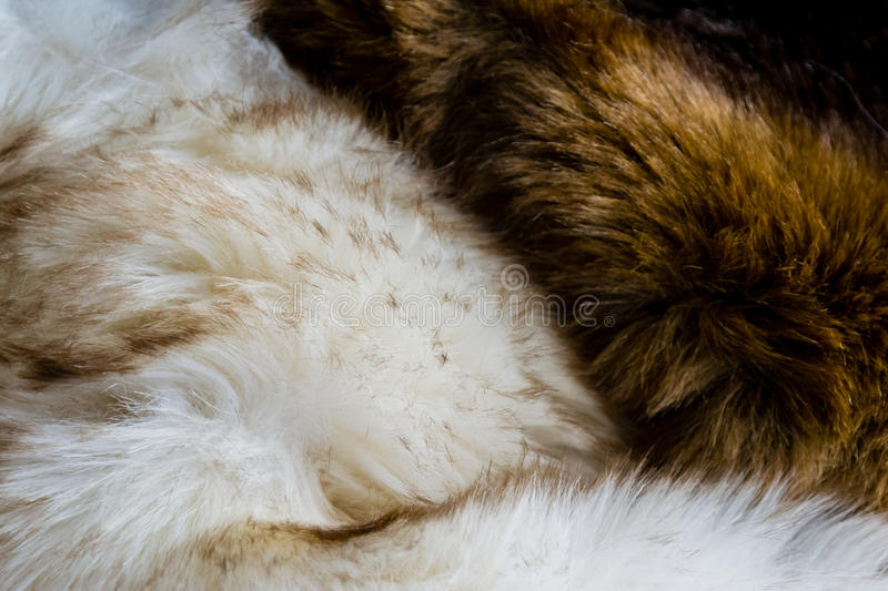 Furs folded together. Furs that are brown and speckled white stock photography