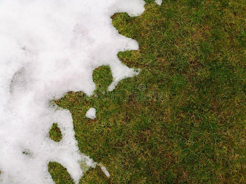 Fusão de neve sobre a relva verde - entre os conceitos de inverno e primavera neve sobre fundo de grama fotografia de stock royalty free
