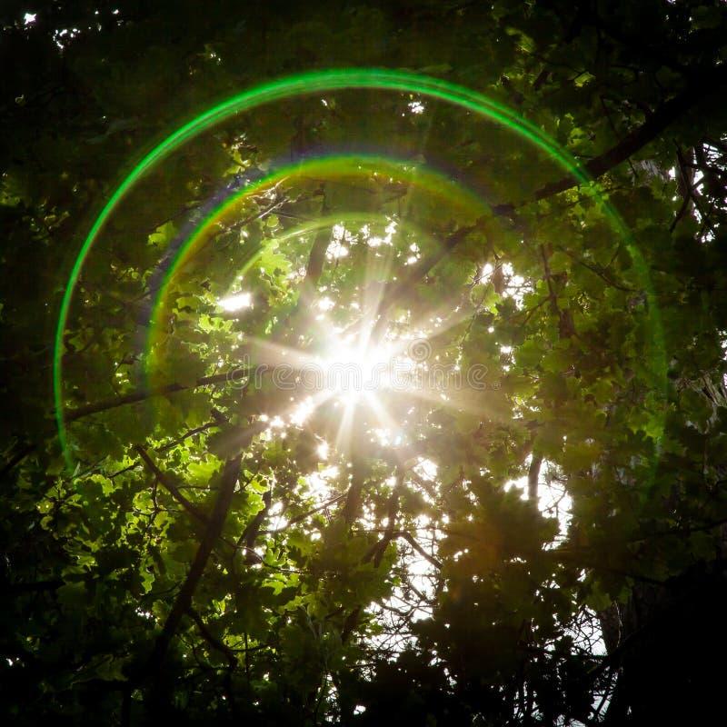 Fusée de lentille et Sun Starburst par des arbres photos stock