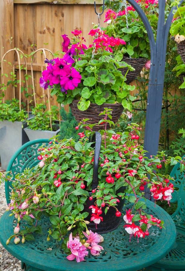 Fuschia在庭院桌上的容器植物 图库摄影