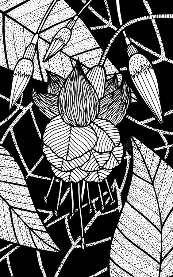 Free Fuschia - Flower Illustration. Black And White Ink Floral Drawing. Coloring Book For Adults. Line Art. Vector Artwork Royalty Free Stock Image - 162288716