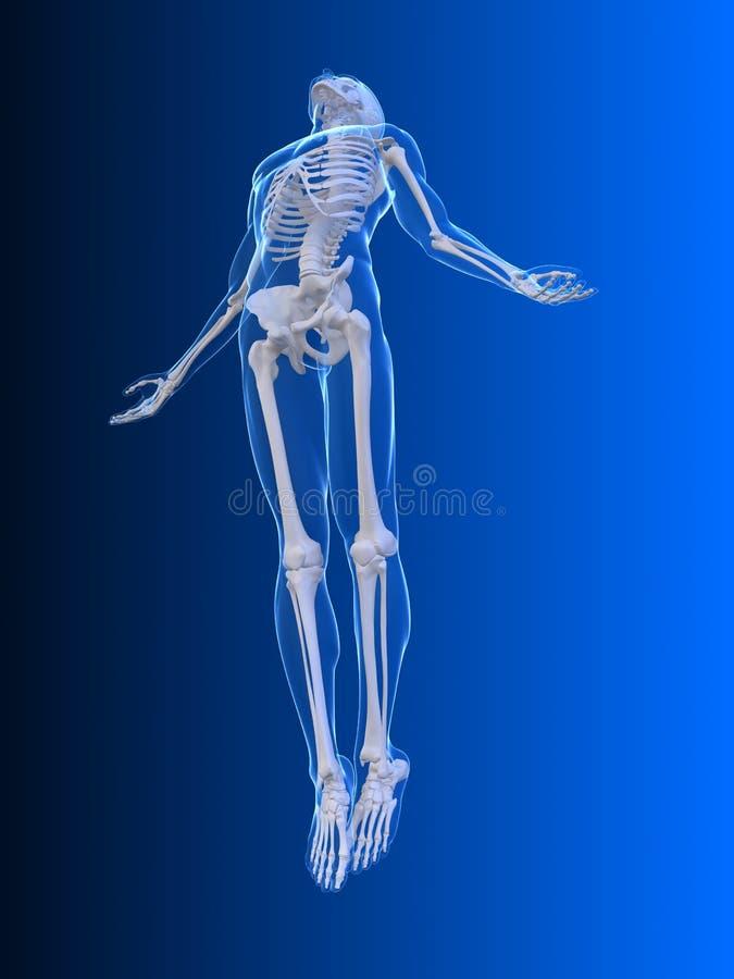 Fuselage en hausse - rayon X illustration libre de droits
