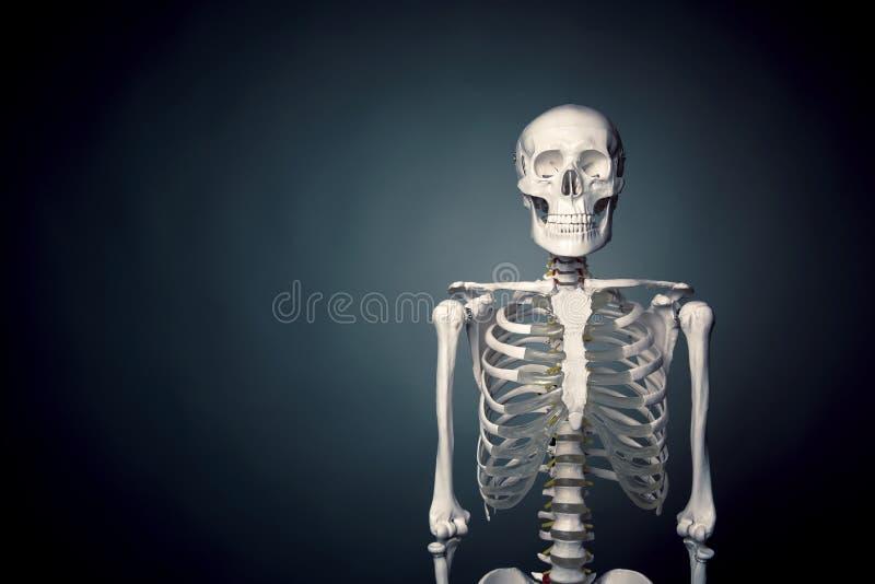 Fuselage squelettique humain sur un fond gris photographie stock libre de droits