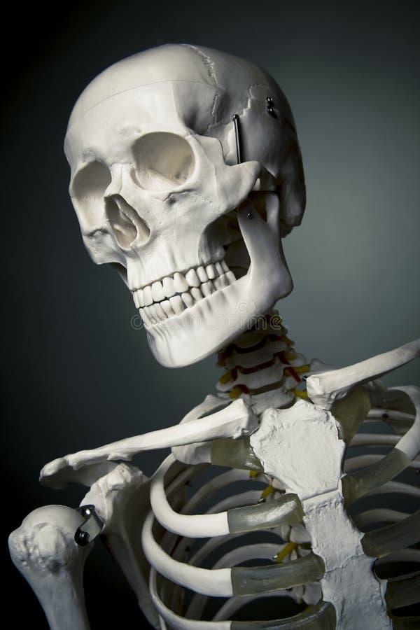 Fuselage squelettique humain sur un fond gris photos libres de droits