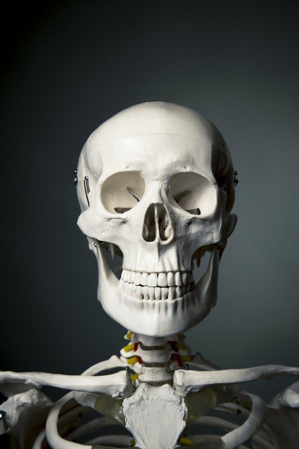 Fuselage squelettique humain sur un fond gris photo libre de droits