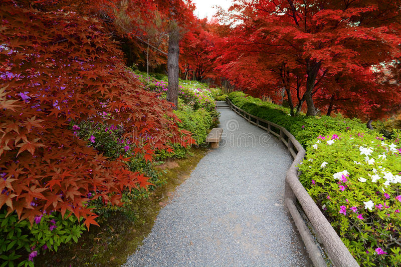 Fusión de las flores de la azalea de la primavera y de las hojas de arce del otoño creadas con tonalidades rojas falsas imagenes de archivo