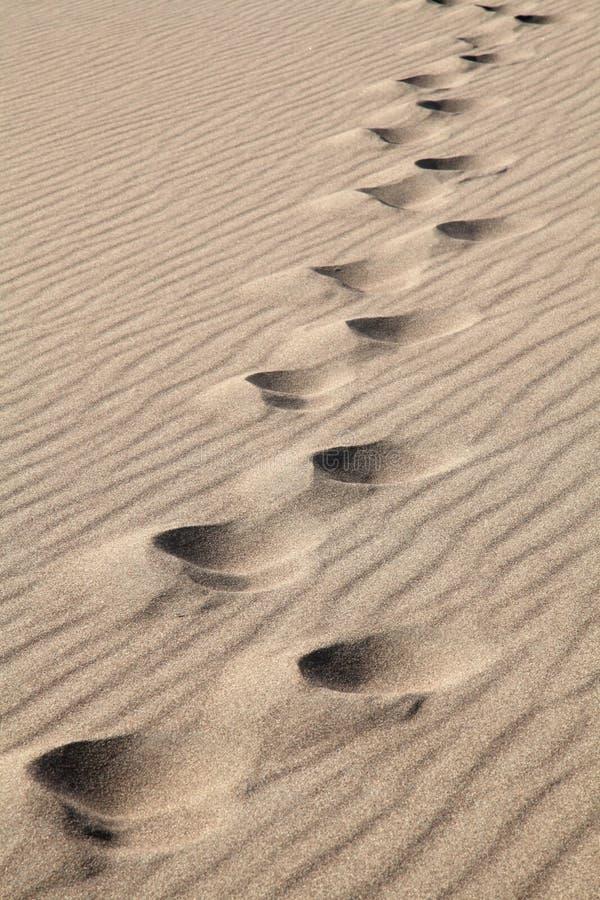 Fuss-Drucke im Sand stockbilder
