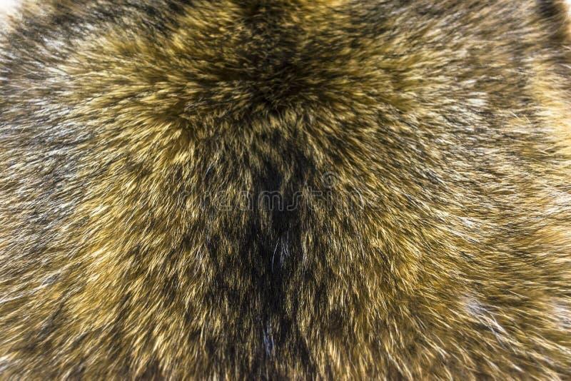 Futerkowy czerwony lis, długa piękna drzemka Tekstura, tło obraz stock