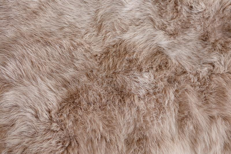 Futro królików brunatnych Tekstura, tło skóry zwierząt zdjęcia royalty free