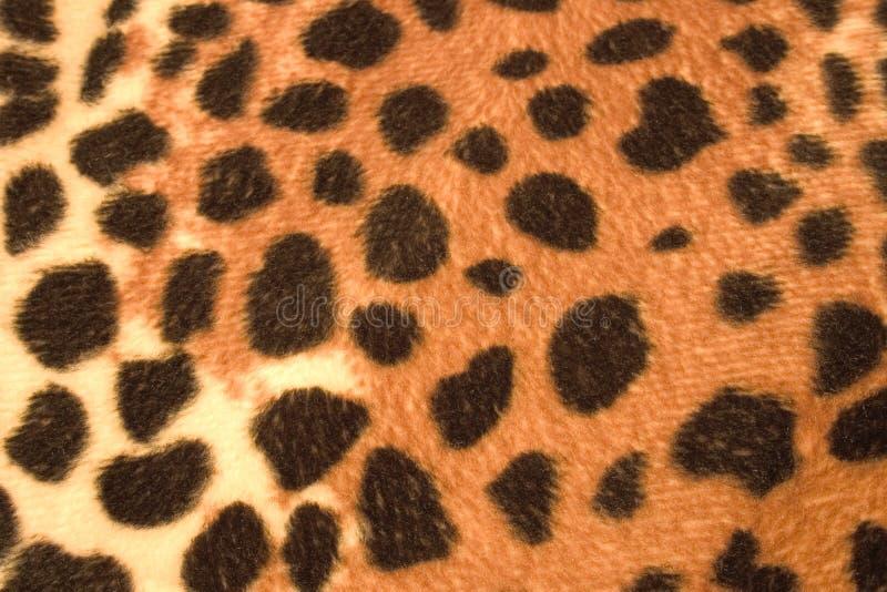 futro zwierzęce zdjęcia stock