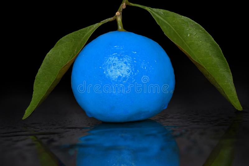 Futuristic blue mandarin with green leaves with reflection and water drops stock photos