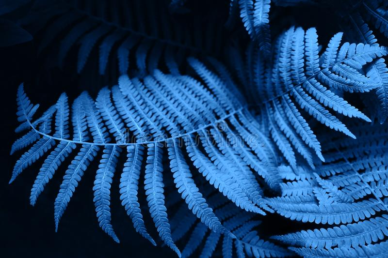Futuristic fern blue leaves. Bright background for your New Year design royalty free stock image