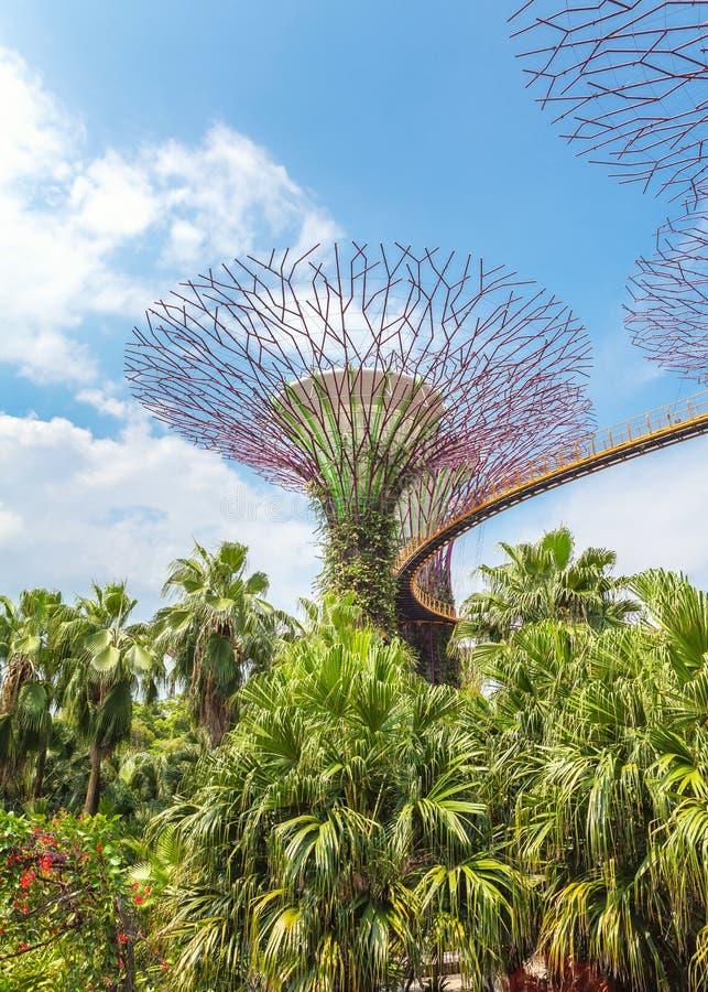 Futuristische super bomen in het centrum van Singapore in Tuinen door de Baai royalty-vrije stock afbeelding