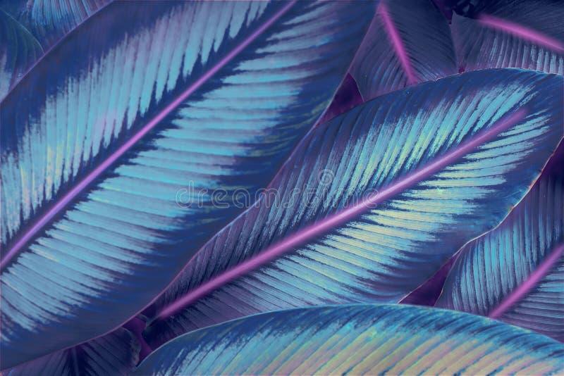 Futurystyczna neonowa dżungla Avatar lubi neonową dżunglę Neonowych świateł 80's lubią zdjęcia stock