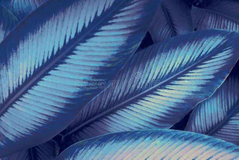 Futurystyczna neonowa dżungla Avatar lubi neonową dżunglę Neonowych świateł 80's lubią zdjęcie stock