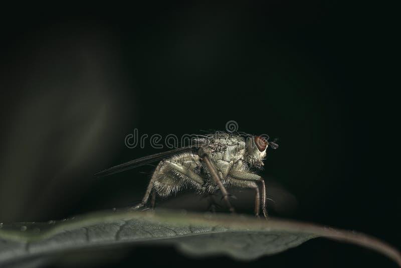 Fuzzy Fly royaltyfri bild
