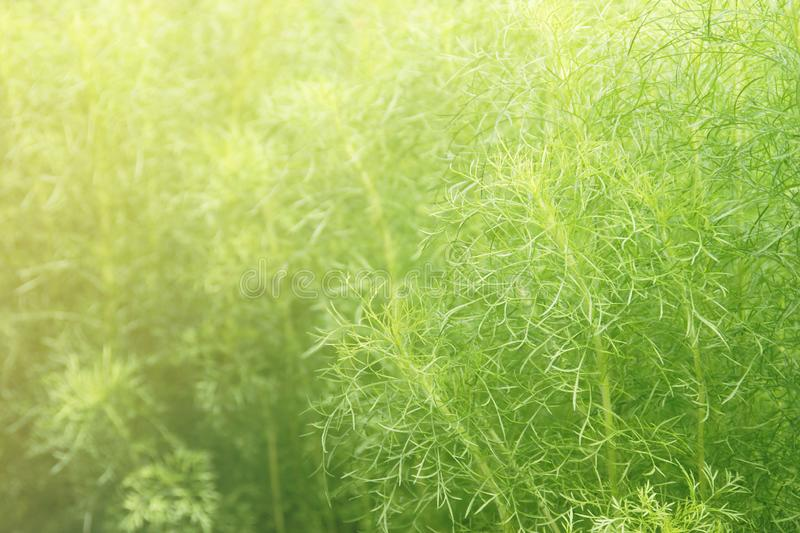 Fuzzy Green Leaves Plants as Background royalty free stock photography