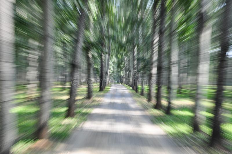 Fuzzy Forest path royalty free stock photos