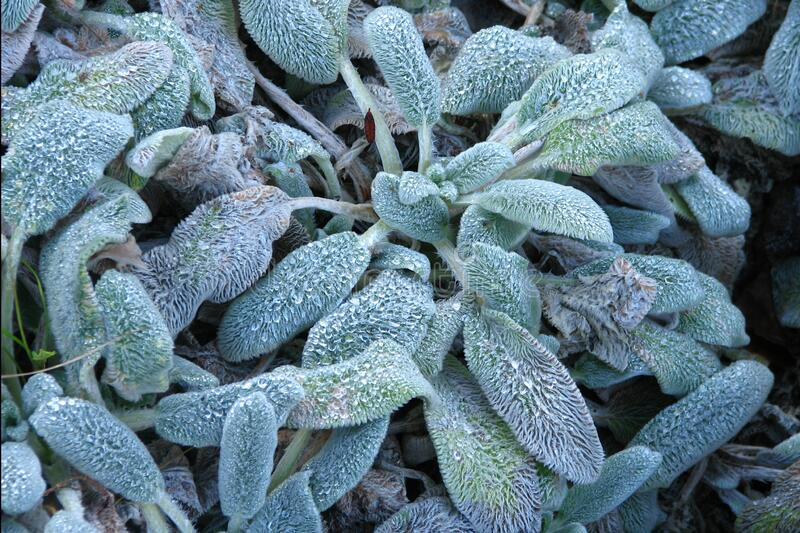 fuzzy leaves stock photography