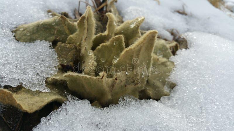 Fuzzy plant. Fuzzy wet plant royalty free stock photography