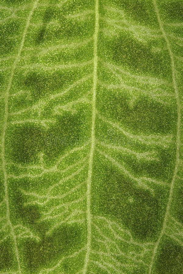 Download Fuzzy Surface Of A Green Leaf As A Background Stock Image - Image: 29777845