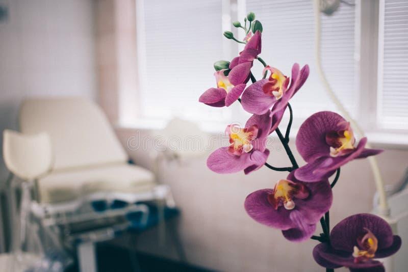 Fyazino, Россия - 06 11 2018: гинекологический стул в doctor& x27; офис s, цветок орхидеи women& x27; концепция здоровья s стоковая фотография